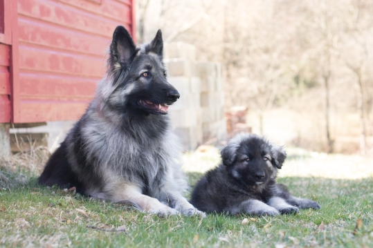 Luna and Kyro$