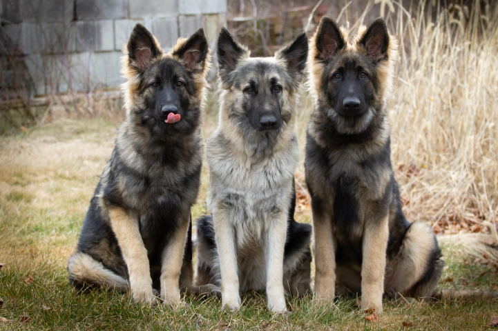 Elara, Nova and Appa