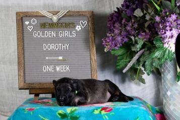 dorothy 1 week