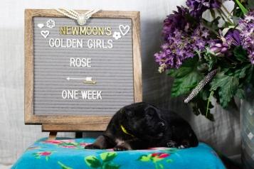 rose 1 week