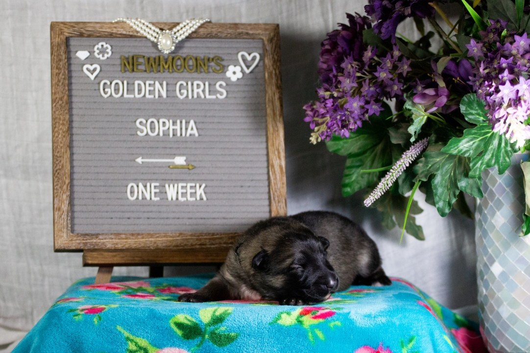 sophia 1 week